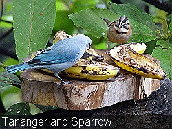 Tananger-and-sparrow